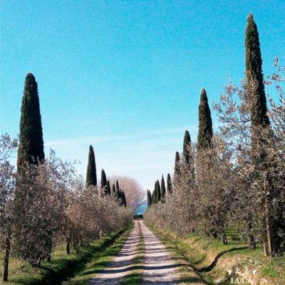 umbria-italia-countryside-accoglienza-frantoio