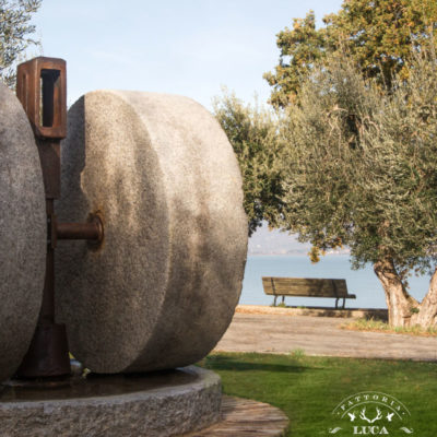 ancient-millstone-olive-tree