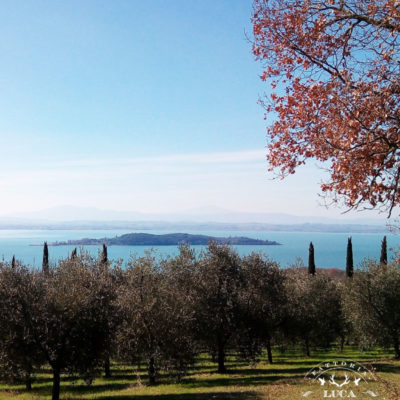 wonderful-polvese-island-trasimeno-lake-olive-tree